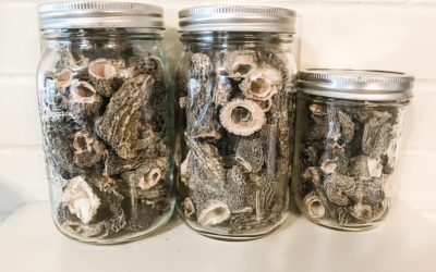 What's New In My Kitchen: Summer Preserving, Mushrooms + More